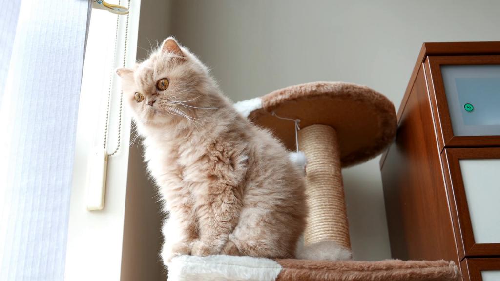 les arbres chat bas prix sont ils synonyme de mauvaise qualit. Black Bedroom Furniture Sets. Home Design Ideas